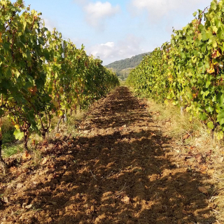 🇫🇷 aujourd'hui nous avons semer des céréales et un mélange de fleur pour les abeilles 🐝 dans nos vignes 😃 🇺🇸 Today we have sown cereals and a flower mix for the bees 🐝in our vines 😃  #beaujolais #vinsdubeaujolais #myauvergnerhonealpes #igersbeaujolais #igerslyon #winestagram #instawine #tourism #foodie  #winetourism #vignoble #frenchwine #winelovers #winegeek #winemaker  #naturelovers #naturephotograpy #natural  #photography #authentic  #picoftheday  #igers #igersfrance #discover #explore #wineblogger #instamoment #aura_focus_on #france_focus_on  #jeanmicheldupré